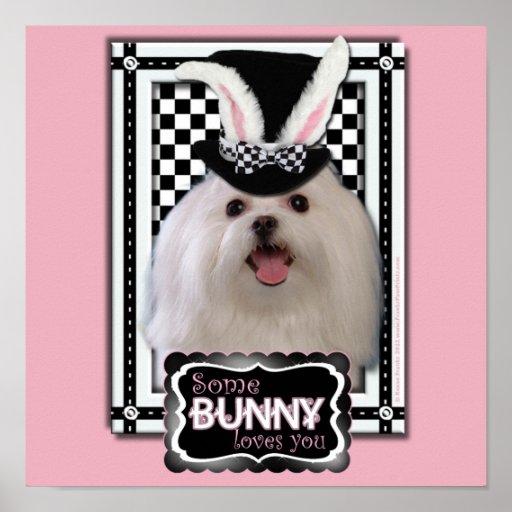 Easter - Some Bunny Loves You - Maltese Poster