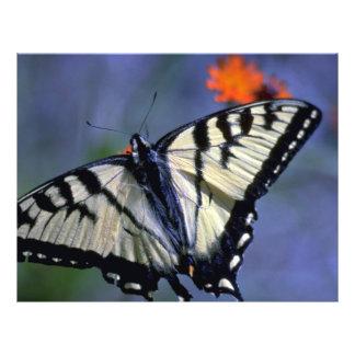 Easter swallowtail butterfly on orange flyer design