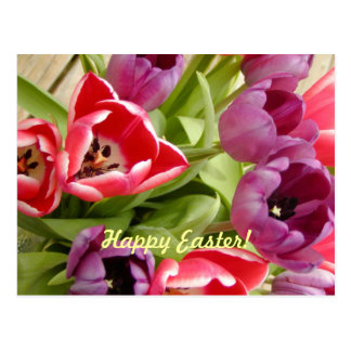 Easter Tulips Holiday Postcard