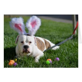 Easter Valley Bulldog Card