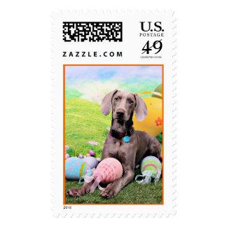 Easter - Weimaraner - Ben Stamp