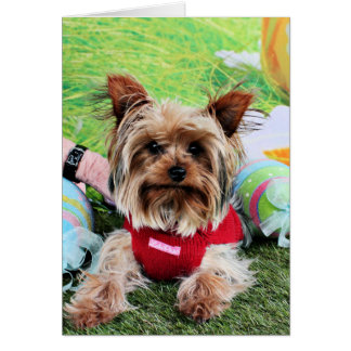 Easter - Yorkshire Terrier - Sassy Greeting Card