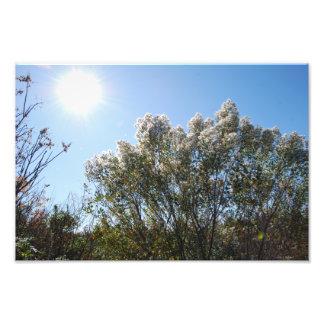 Eastern Baccharis Tree print Photo Art