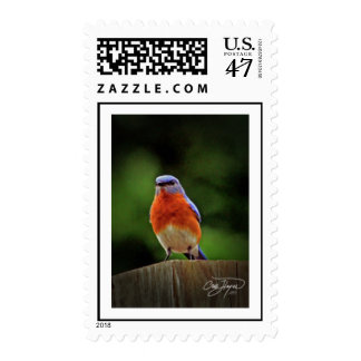Eastern Blue Bird Postage