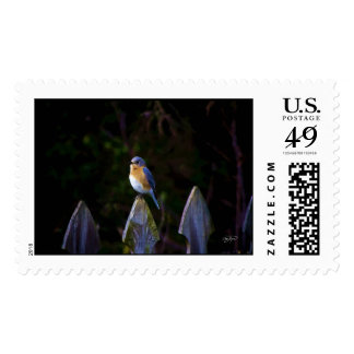 Eastern Blue Bird Postage Stamp - Oil Painting Sty