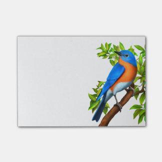 Eastern Bluebird Art Post-It Notes