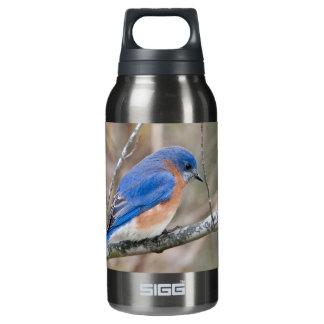 Eastern Bluebird Blue Bird in Tree Water Bottle
