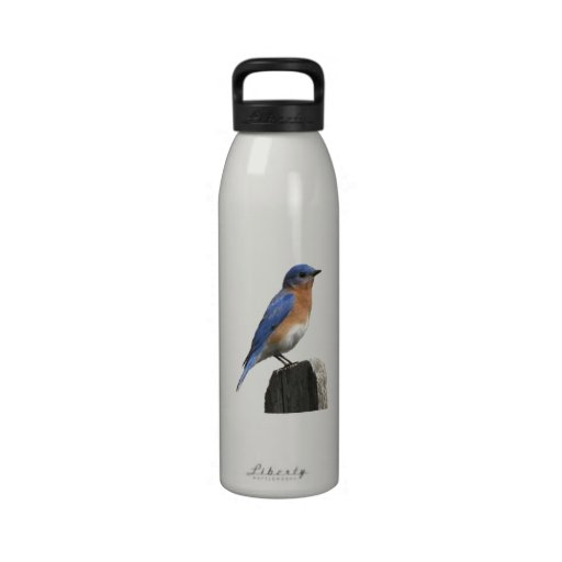 Eastern Bluebird Bottle Drinking Bottle