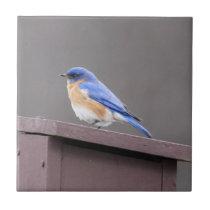 Eastern Bluebird Ceramic Tile