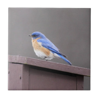 Eastern Bluebird Ceramic Tile