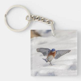 Eastern Bluebird dancing in the snow Keychain