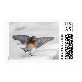 Eastern Bluebird dancing in the snow Postage