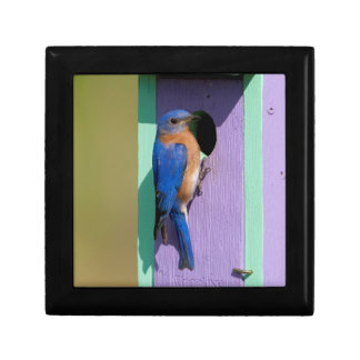 Eastern Bluebird Gift Box