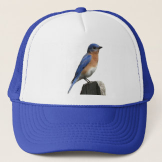 Eastern Bluebird Hat