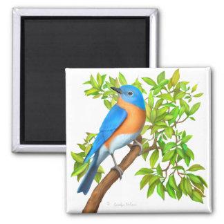 Eastern Bluebird in Tree Magnet