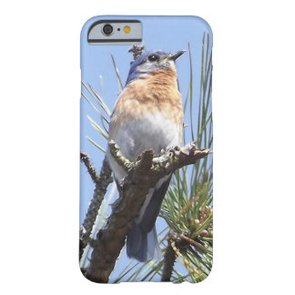Eastern Bluebird IPhone Case