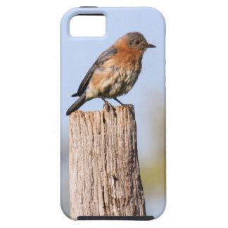 Eastern Bluebird iPhone SE/5/5s Case