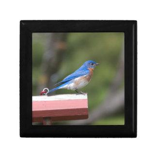 Eastern Bluebird Jewelry Box