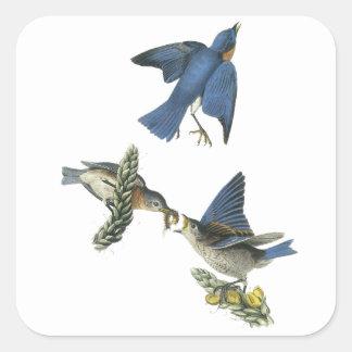 Eastern Bluebird, John Audubon Square Stickers