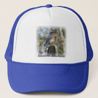 Eastern Bluebird Male Hat