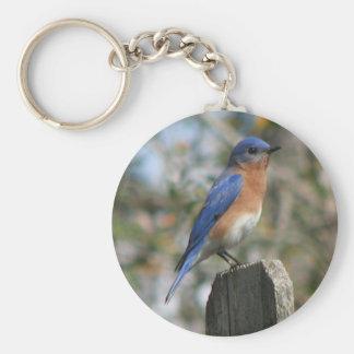 Eastern Bluebird Male Keychain