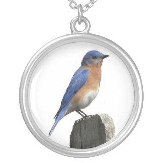 Eastern Bluebird Male Round Pendant Necklace