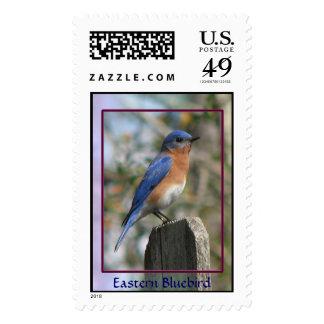 Eastern Bluebird Male Postage