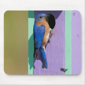 Eastern Bluebird Mouse Pad