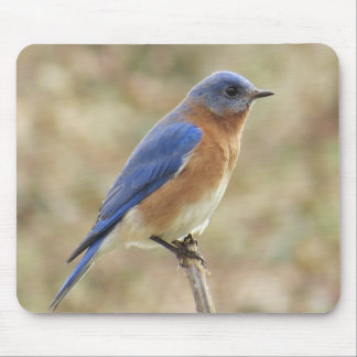 Eastern Bluebird Mousepad