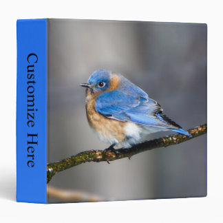 Eastern Bluebird One Touch EZD™ Ring Avery Binder