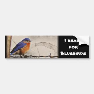 Eastern Bluebird Photo Car Bumper Sticker