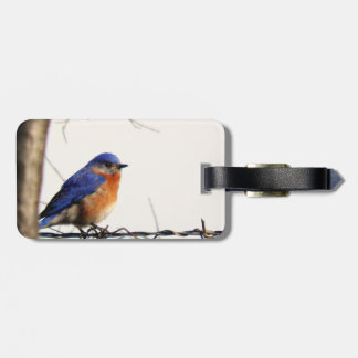 Eastern Bluebird Photo Luggage Tag