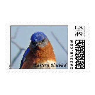 Eastern Bluebird Photo Postage