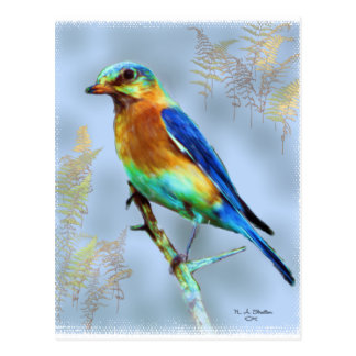 Eastern Bluebird...Postcard Postcard