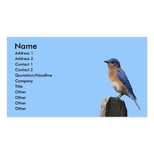 Eastern Bluebird Profile Card Business Cards