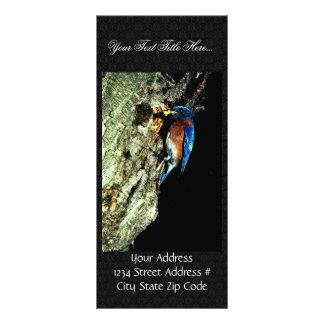 Eastern Bluebird Rack Card