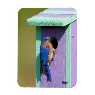 Eastern Bluebird Rectangular Photo Magnet