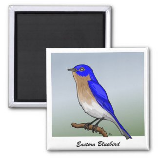 Eastern Bluebird rev.2.0 Buttons and Flair 2 Inch Square Magnet