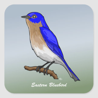 Eastern Bluebird rev.2.0 Buttons and Flair Square Sticker