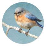 Eastern Bluebird Round Sticker