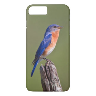 Eastern Bluebird (Sialia Sialis) Adult Male 2 iPhone 7 Plus Case