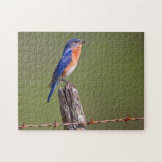 Eastern Bluebird (Sialia Sialis) Adult Male 2 Jigsaw Puzzle