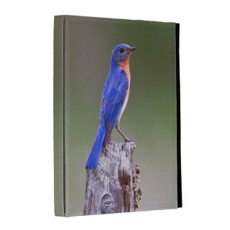 Eastern Bluebird (Sialia Sialis) Adult Male iPad Case