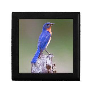 Eastern Bluebird (Sialia Sialis) Adult Male Keepsake Box