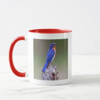 Eastern Bluebird (Sialia Sialis) Adult Male Mug
