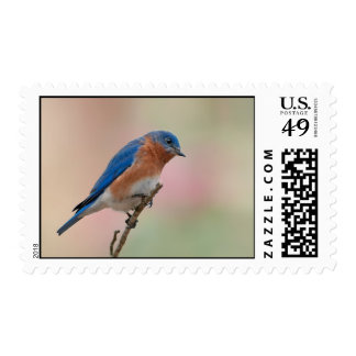 Eastern Bluebird Stamp