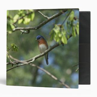 Eastern Bluebird, Three Ring Binder. 3 Ring Binder