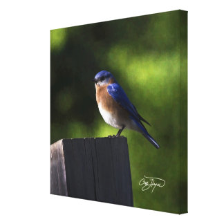 Eastern Bluebird Wall Decor Home or Office Print R