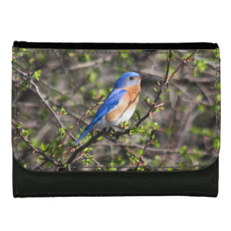 Eastern Bluebird Wallet For Women