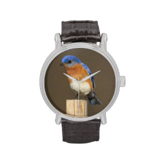 Eastern Bluebird Wrist Watches